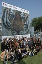 The tiger mosaic unveiled