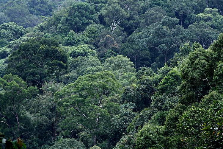 WWF'S green economy project in Borneo bears fruit