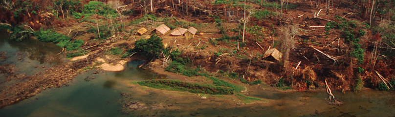Deforestation In The Amazon Wwf