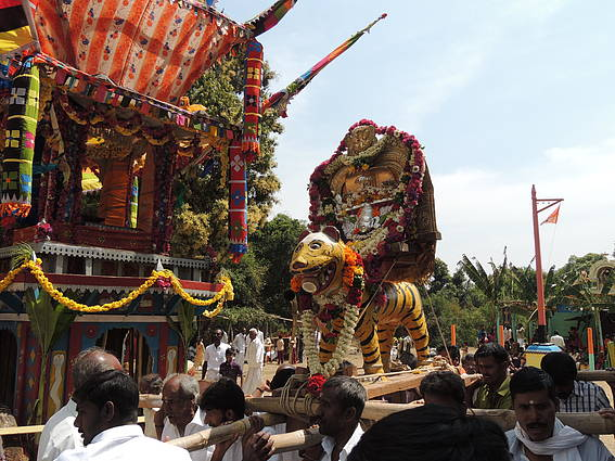 The wooden figurine of the tiger is carried out in a procession during the annual festival of Aiyan Temple, belonging to the Urali tribes in Sathyamangalam. The Uralis worship the tiger as a God and consider sighting of a tiger in the wild as a good omen.