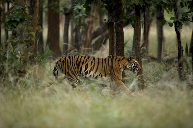 Annual Report 2018 - Doubling Wild Tigers