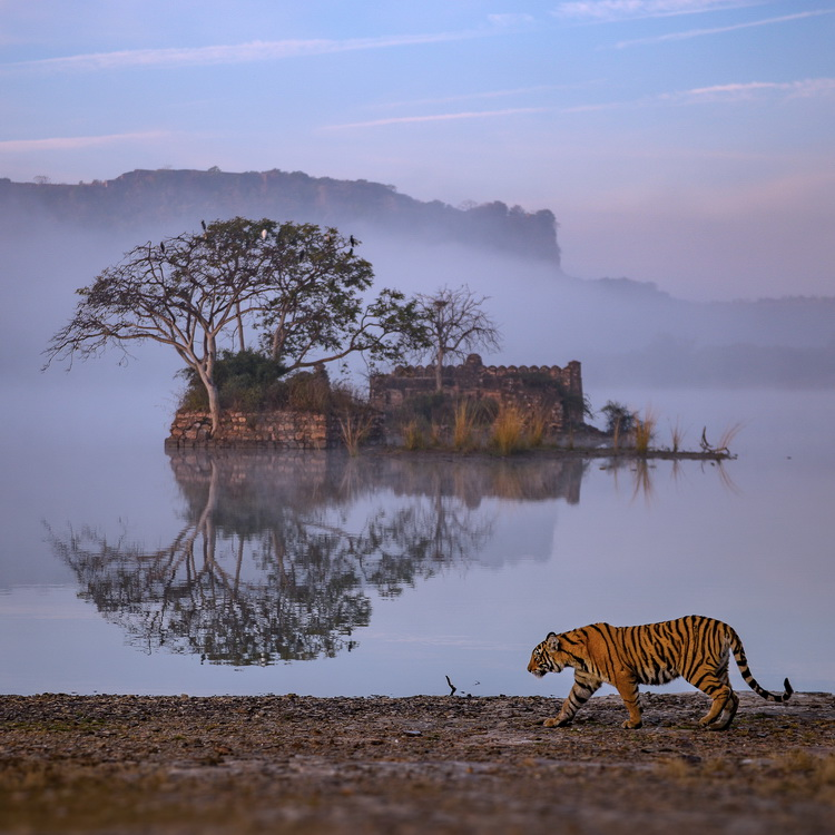 Annual Report 2019 - Doubling Wild Tigers