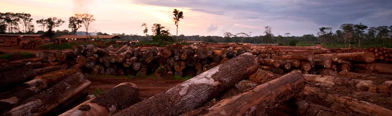 Deforestation in africa wwf africa deforestation publicscrutiny Images