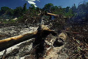 WWF Sweden is urging its government to get behind an effective international agreement on halting forest loss.