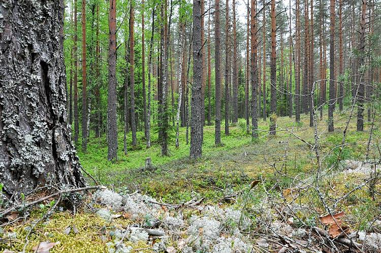 WWF welcomes new Forest Stewardship Council (FSC) forest management standard in Russia
