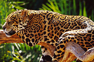 Atlantic Forests, South America | WWF