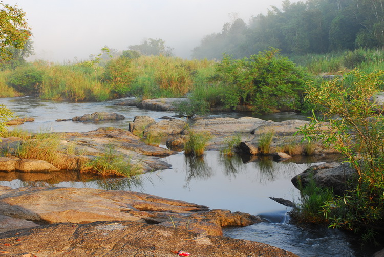 How Much Mae Wong Dam Affect Forests and Wildlife