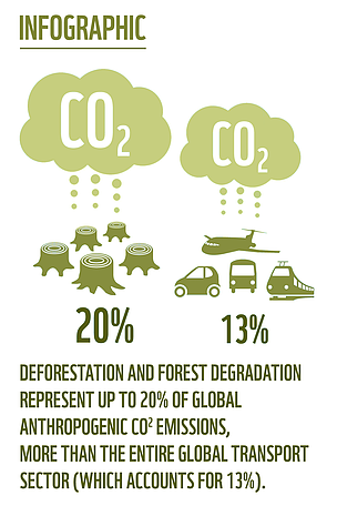 Deforestation Deforestation and forest degradation represent up to 20% of global anthropogenic CO2 emissions.