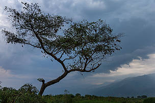 Virunga oil permits should be cancelled, UNESCO rules