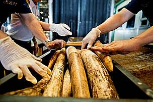 Progress at illegal wildlife trade meeting but urgent action still needed