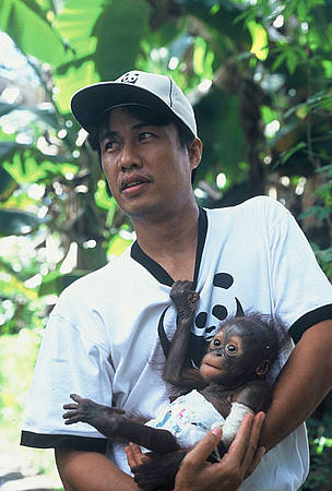 Syahir Syah of WWF-Kapuas Hulu holds Monyong, a baby orang-utan that was saved from the illegal ...  © WWF / Jikkie JONKMAN