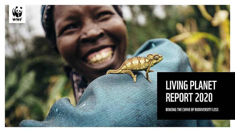 WWF's Living Planet Report Reveals Average Two-thirds Decline in Wildlife Populations Since 1970