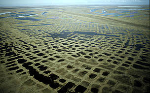 Aerial photograph of the impressive polygon tundra in the Lena Delta Nature Reserve, Siberia, Russian Federation