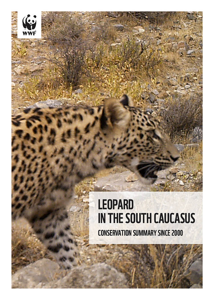 Leopard in the South Caucasus