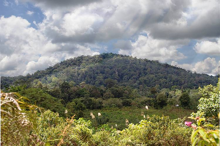 Planning for Forests in Indonesian Villages