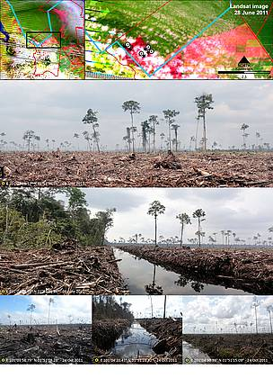 Peat draining and large-scale clearance of natural forest by APP wood supplier PT. Ruas Utama Jaya inside APP's Senepis Tiger Sanctuary in June and October 2011. Arrows next to photo numbers in map (top right) indicate directions photos were taken.