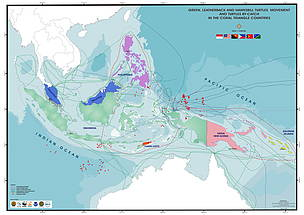 Green, leatherback and hawksbill turtles movement and turtles bycatch in the Coral Triangle countries