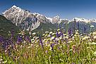 Meager meadow habitat, Grisons
