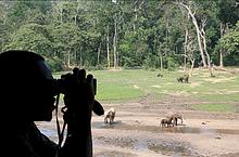 Observing_elephants - CAR
