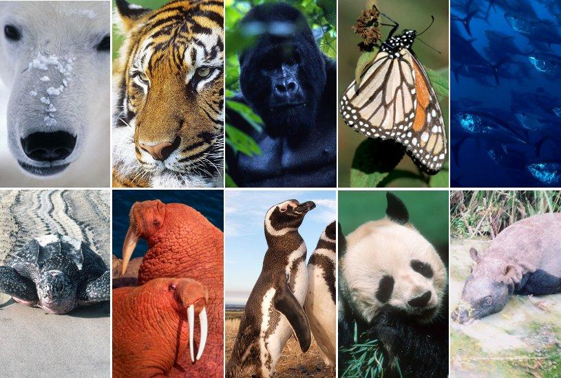 Especies en vías de extinción a cuidar en 2010