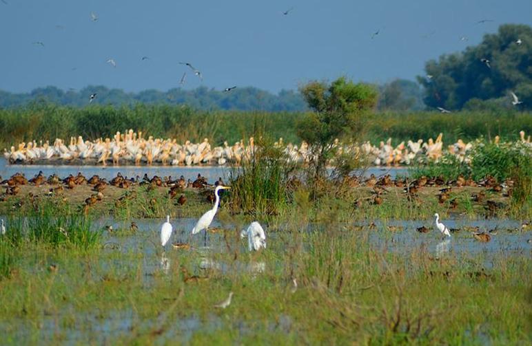 Водно-болотні угіддя — джерело життя для людей і дикої природи | WWF ukraine