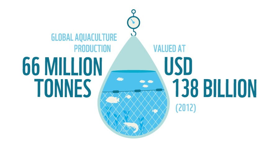 The value of global aquaculture production