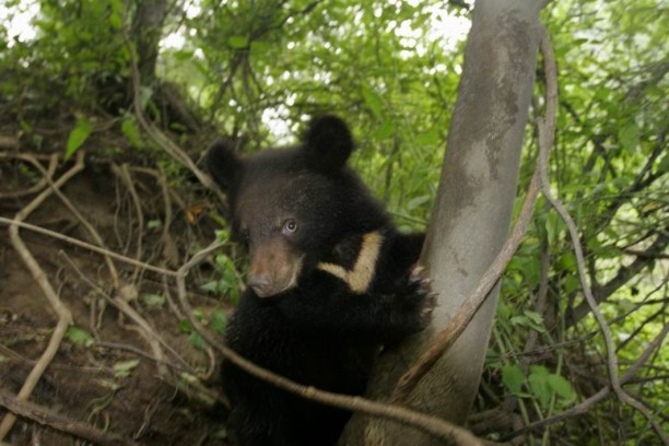 A black bear was spotted during the patrolling.