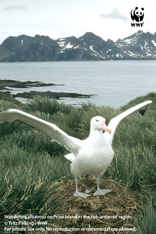 Albatross Wwf