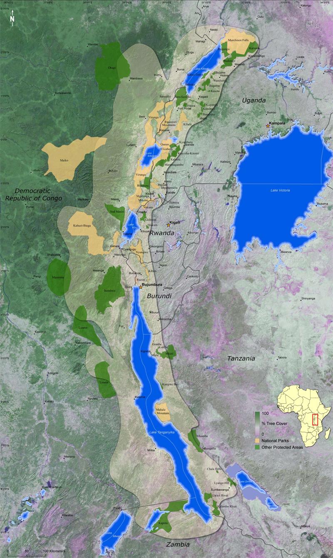 Albertine Rift Montane Forests - A Global Ecoregion   WWF