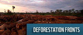 deforestation fronts wwf