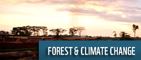 forest climate wwf