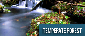 temperate forest wwf