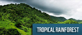 tropical rainforest wwf
