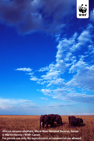 elephant wallpaper. Download wallpaper PC | iPhone