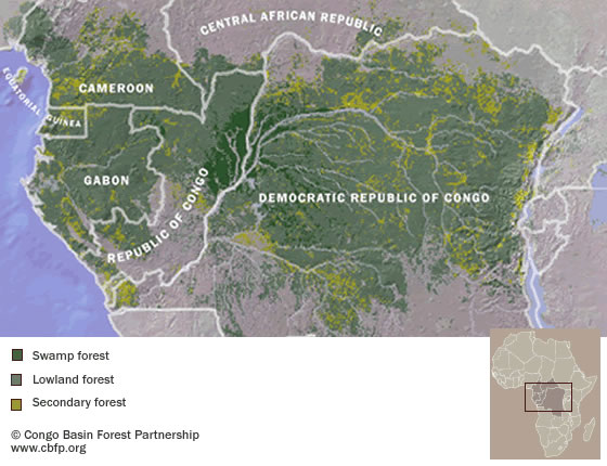 Forests of central africa click to enlarge congo basin forest