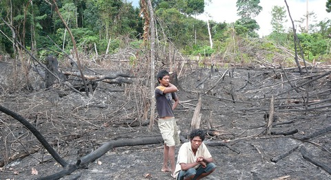 Orang Rimba forced to burn their own forest for survival
