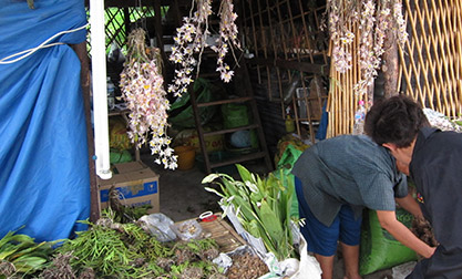 Orchids at Chatuchak Market Bangkok Jacob Phelps