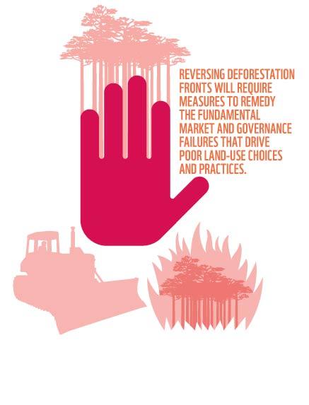 Reversing Deforestation