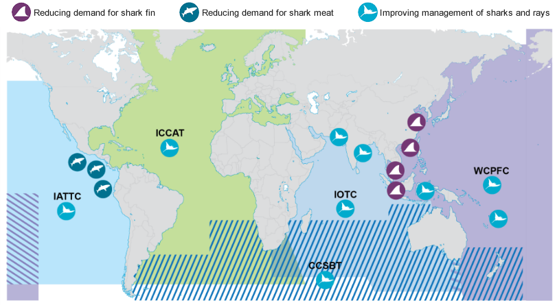 Sharks Map