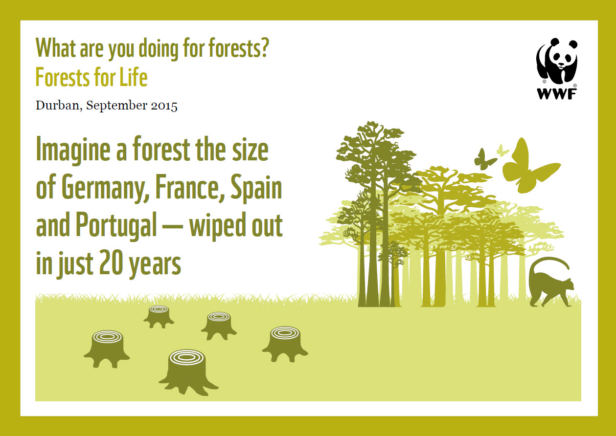 What are you doing for forests?   WWF