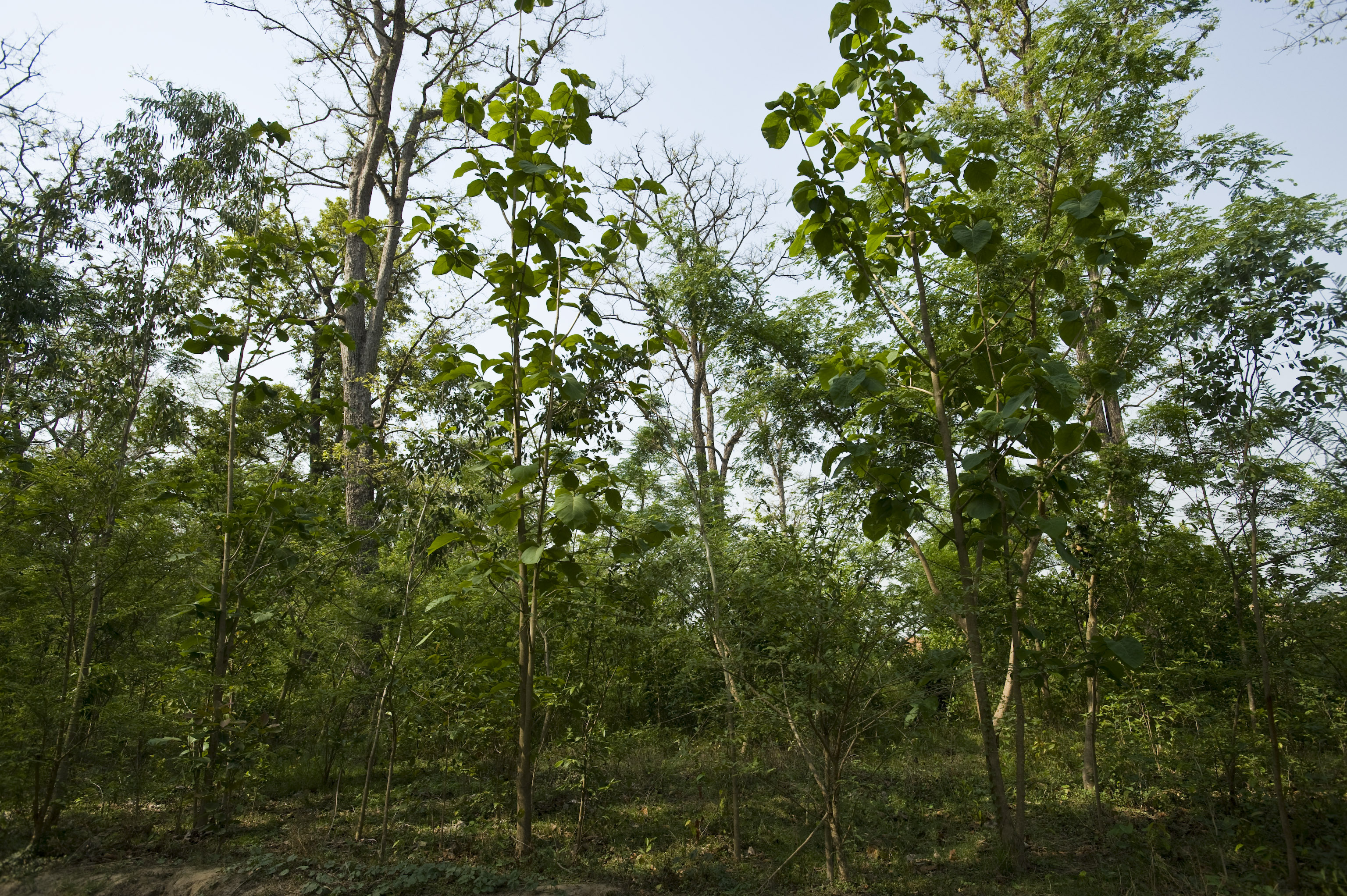 The Terai Arc Landscape Project (TAL) - Forest Restoration ...