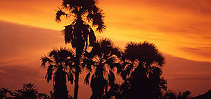 Petit Loango National Park Sunset with silhouette of palm trees near Setté Cama, Gabon.  © WWF / Olivier LANGRAND