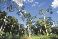 Bolivia takes the lead in certifying tropical forests