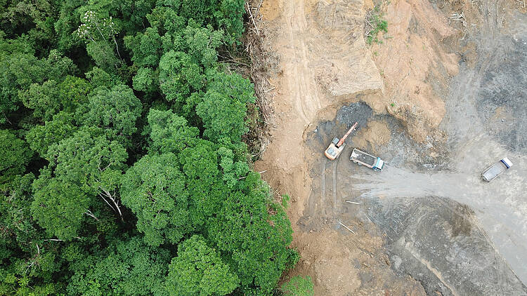 Addressing EU-driven deforestation and nature destruction