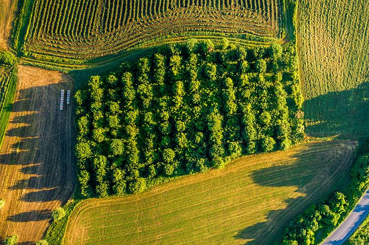 Growing trees on farmland