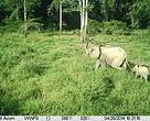 Elephants caught on camera trap