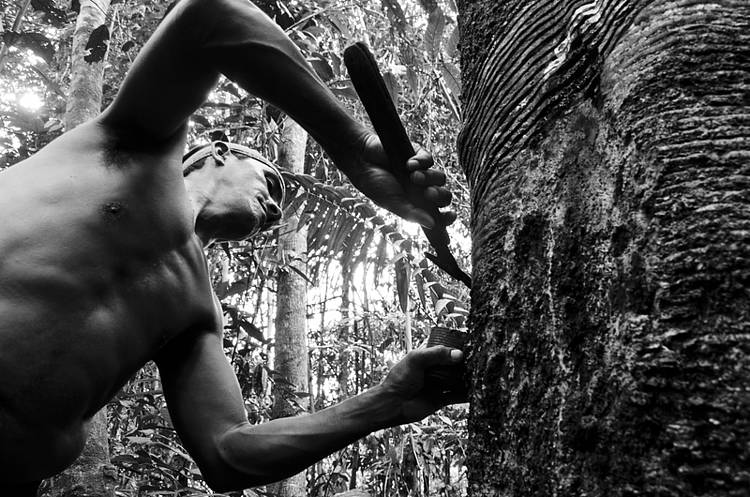 Exploring smallholder solutions in the rubber sector