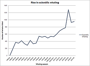 The rise in scientific whaling to 2008.  © WWF