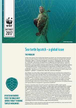 Sea turtle bycatch - factsheet cover image