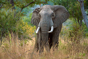 The Selous World Heritage site has lost 90% of its elephants to ivory poaching syndicates.